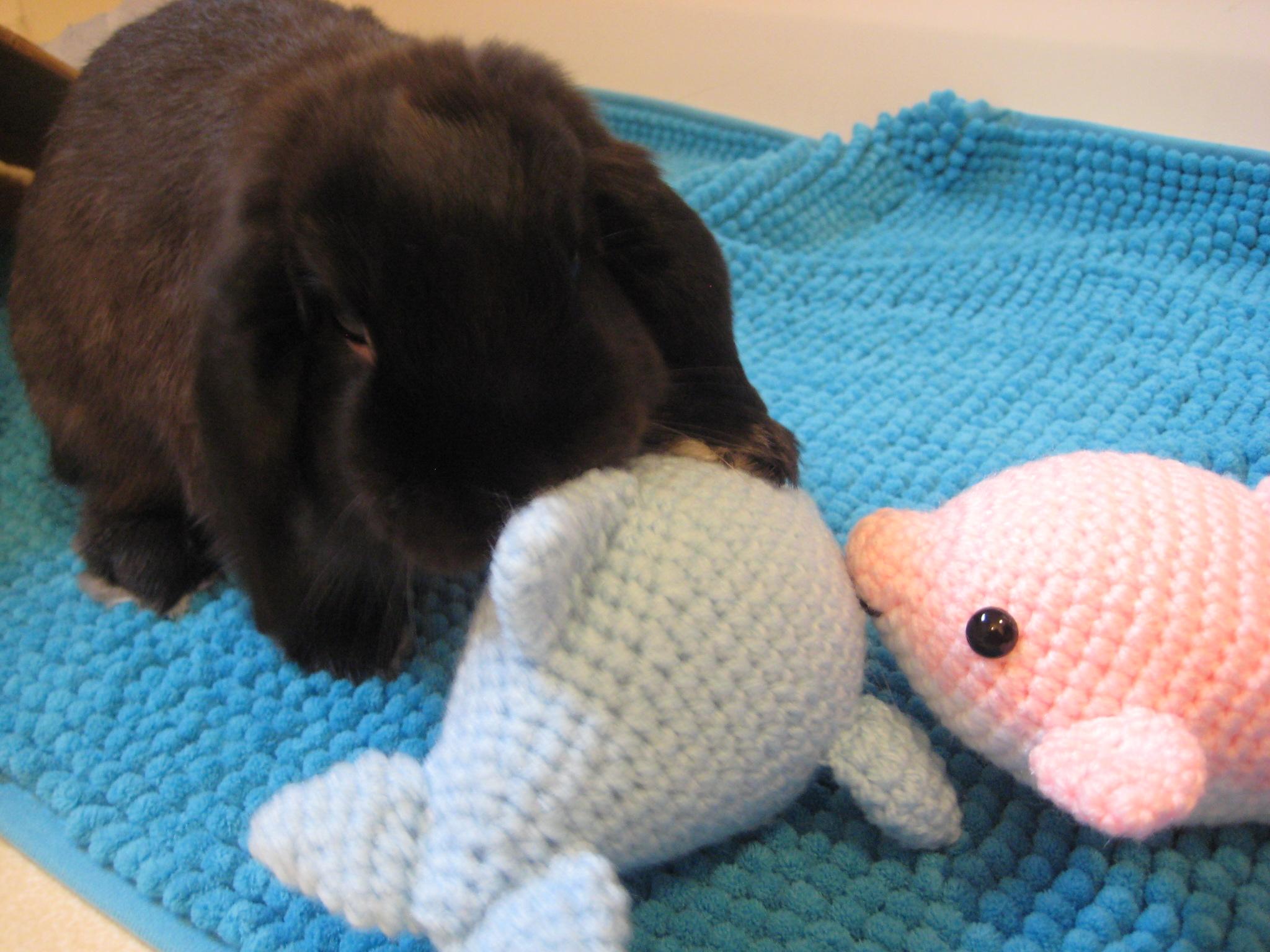 Amigurumi Crochet Definition : Awkward Soul Crochet Patterns Amigurumi Cuteness Auto ...